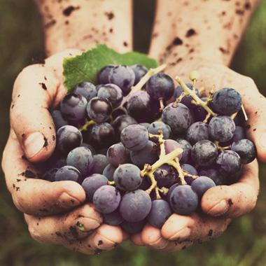 Wein Natur pur